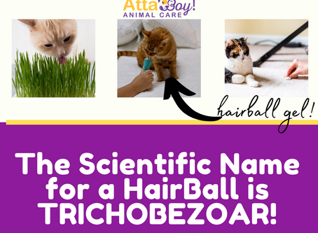 Cat Hairballs!