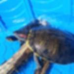 Zorro and Blue.jpg