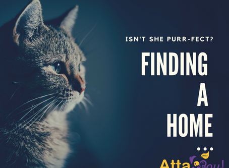 Finding a Home