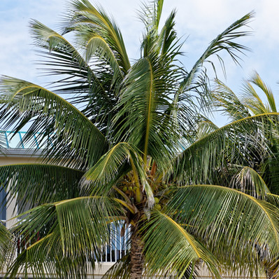 Palm Trees and Soft Breeze