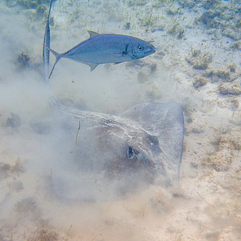 Stingray and Fish