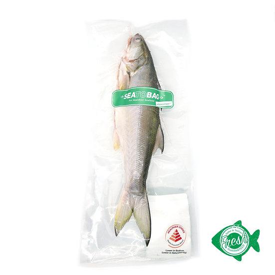 LACTOSEAFOOD® Omega3 Fourfinger Threadfin Whole