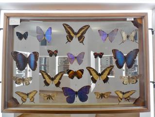 Un museo delle farfalle a Guardia Sanframondi.