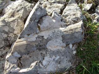 Le rudiste: i principali fossili del Matese.