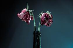Dead Flowers (1 of 1)