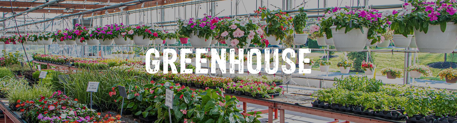 6 - Greenhouse.png