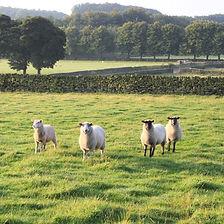 Barns_Croft_to_Ladywash_Jun_early_Sept_10_205_edited.jpg