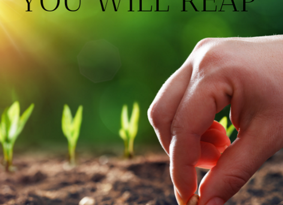 When You Sow, You Will Reap - DVD