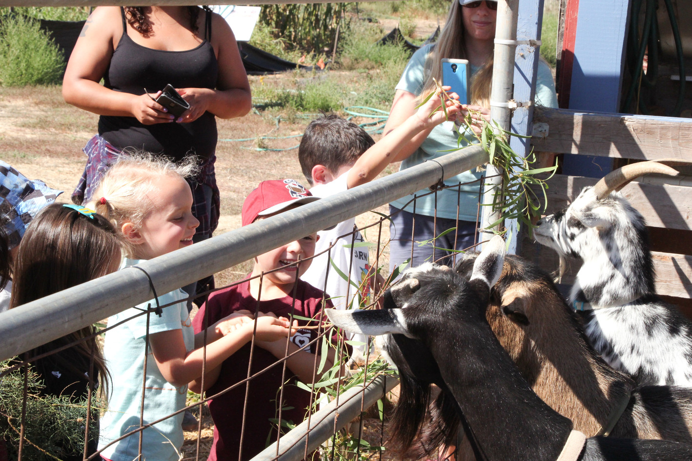 Feeding our goats