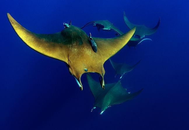 Grossfisch auf den Azoren