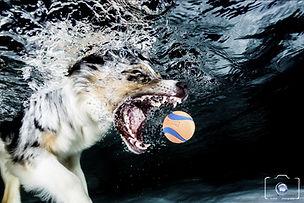 Auch Hunde geben kein schlechtes Bild unter Wasser ab...