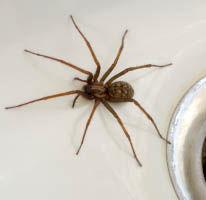 house spider in vermont