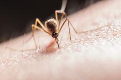 Mosquito Treatment Burlington Vermont
