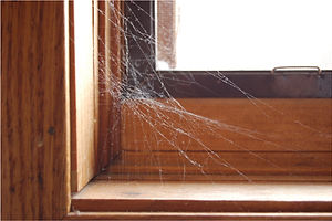 common house spider web in vermont