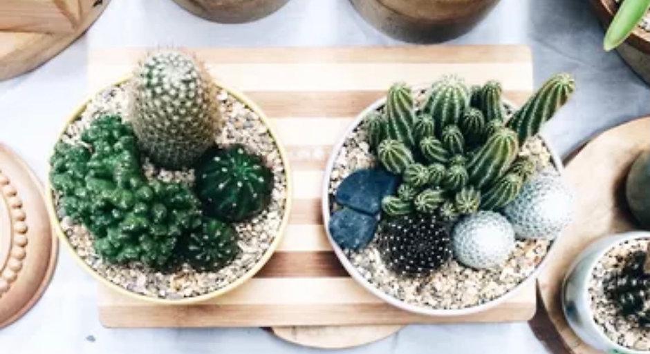 Boho Thrifters Cactus Arrangement Workshop