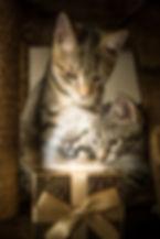cat-4700031_1920.jpg