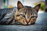 cat-4321002_1920.jpg