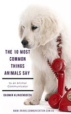 The 10 Most Common Things Animals Say -