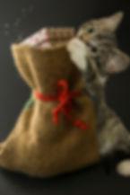cat-4626726_1920.jpg