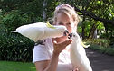 Animal Communication.jpg