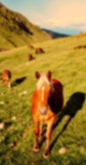 horses-2692771_1920_edited.jpg