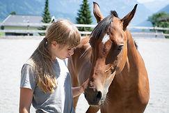 horse-5098676_1920.jpg