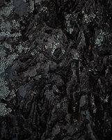 vinicius-muller-1lW9pX0EuPw-unsplash (1)