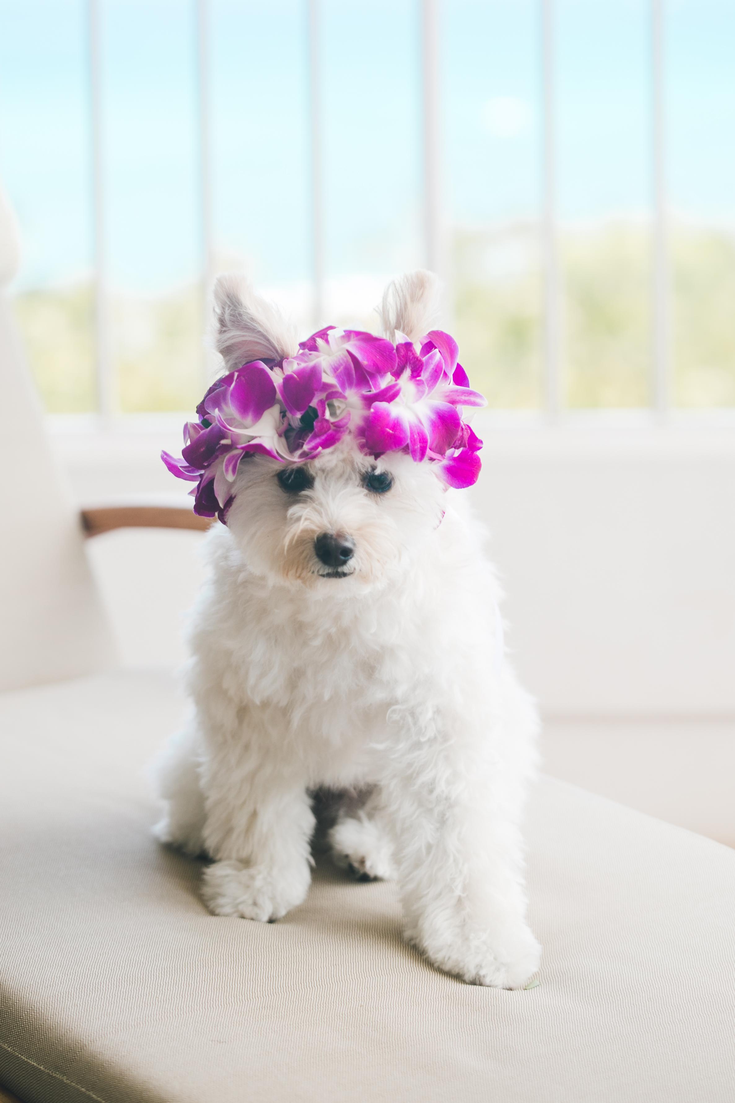 Doggie Haku