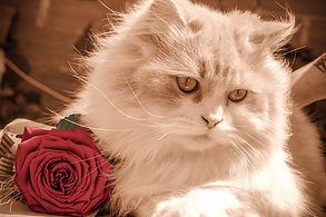 kitten-1807071_960_720.jpg