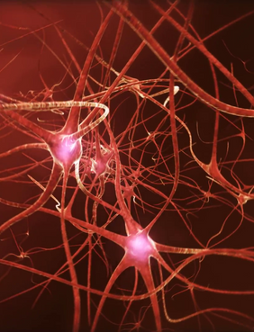 Neuroplasticity: The Self-Healing Brain