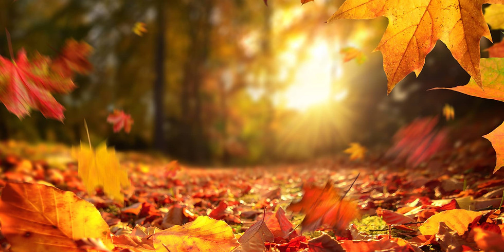 Step Gently into Autumn - Hike, Breathe and Be!