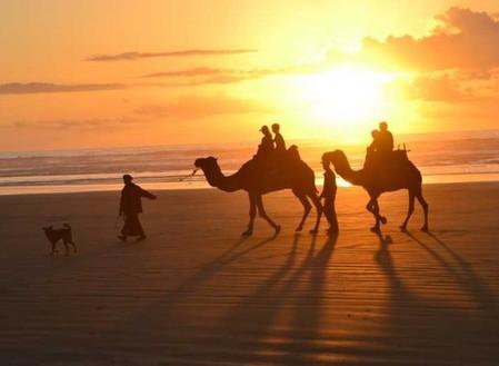 camel ride 75.jpeg