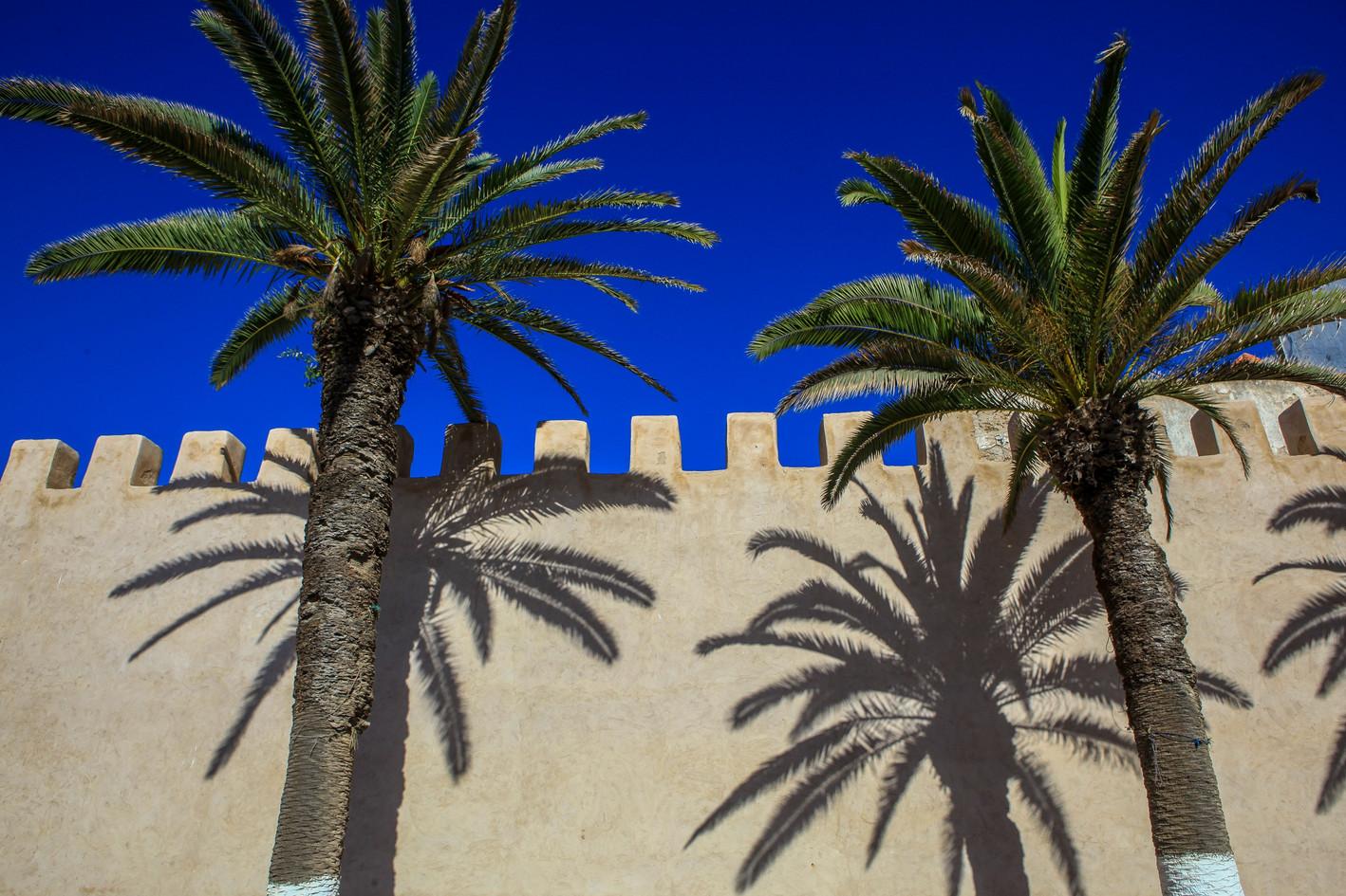 1343898 palm.jpg
