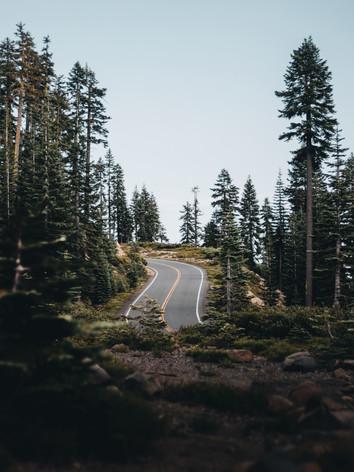 shasta road.JPG