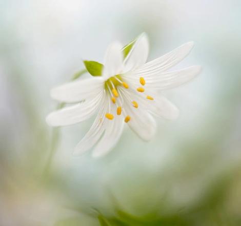 Fleur_épanouie