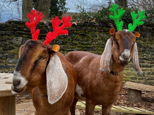 Feed Your Christmas Tree to the Goats & Other Tips for Post Holiday Ease