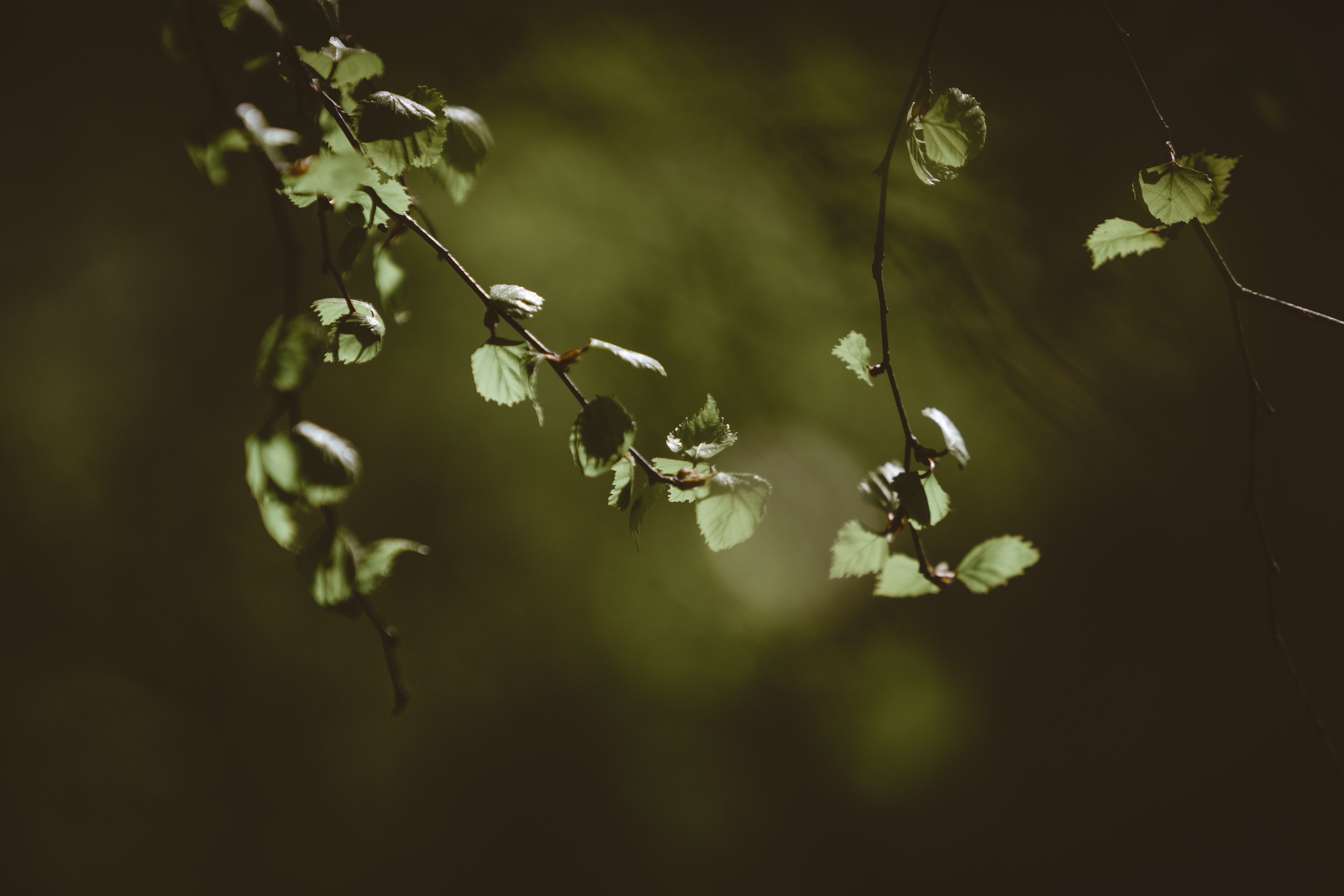 Deepening Into Receptivity