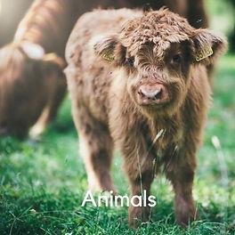 9. Animals.jpg