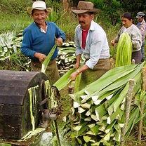 2. Fique farmers.jpg