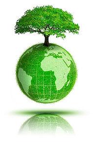 green_tree.jpg
