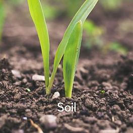 16. Soil.jpg