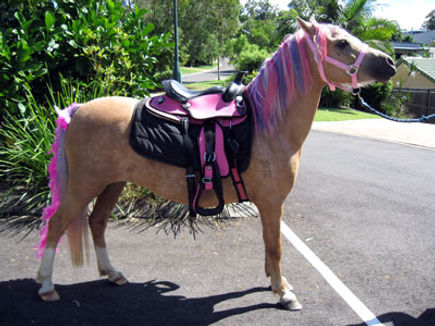 my little pony for pony rides,pink and purple pony