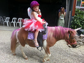 quiet ponies for pony rides, sunshine coast pony rides