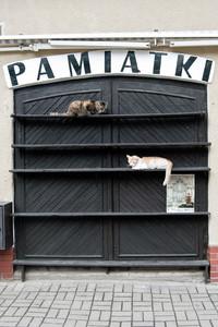 Pamiątki warmińskie, Reszel, 2013