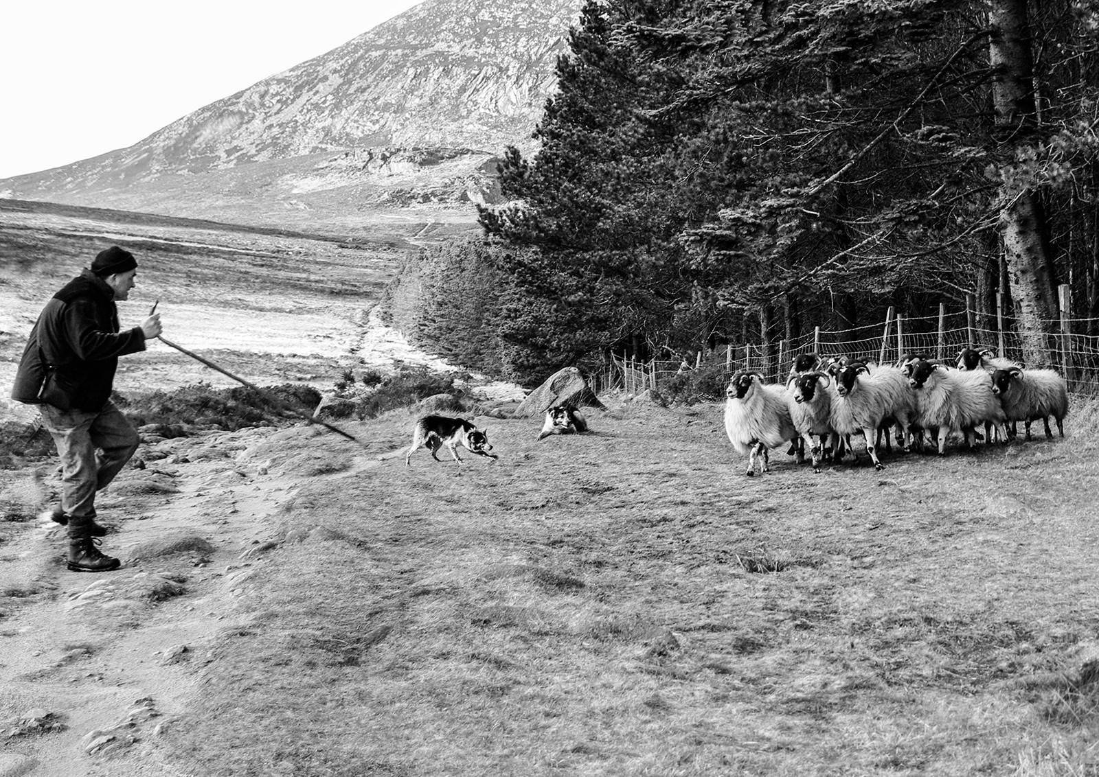 MONO - Seamus The Shepherd by Danny McCaughan (10 marks)