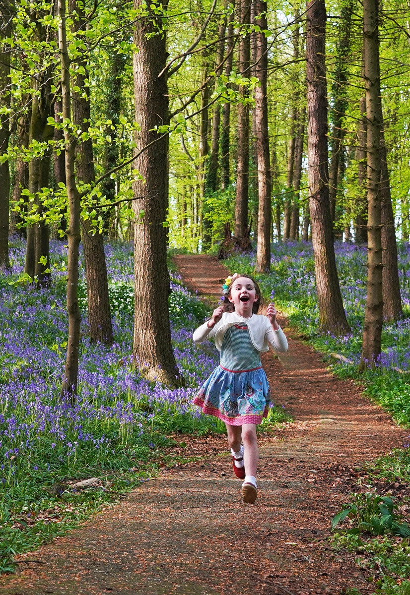 COLOUR - Bluebell Polka by Rowland White (9 marks)