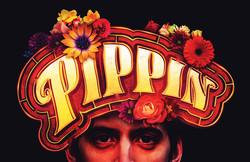 Pippin3_Standard