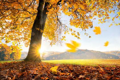 Farbige Jahreszeit - Sport, Lifestyle & Ernährung im Herbst