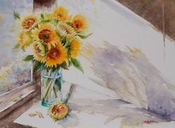 Light and Shadow...Sunflowers