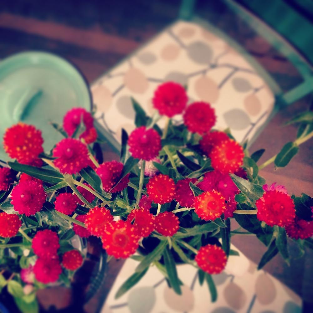 פרחים הביתה